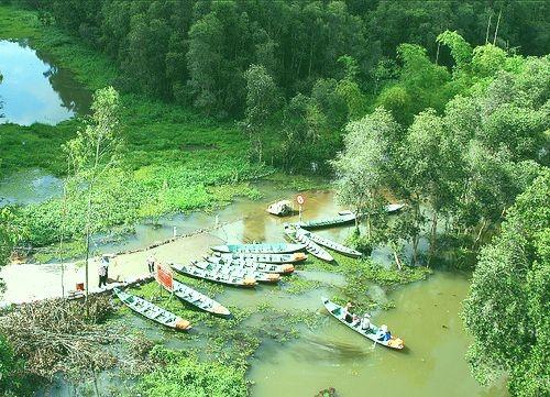 Gao Giong- zona ekowisata  yang menarik di kawasan Dong Thap Muoi - ảnh 2
