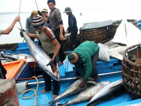 Kaum nelayan provinsi Binh Dinh mencapai panenan raya dalam penangkapan ikan awal tahun baru - ảnh 1