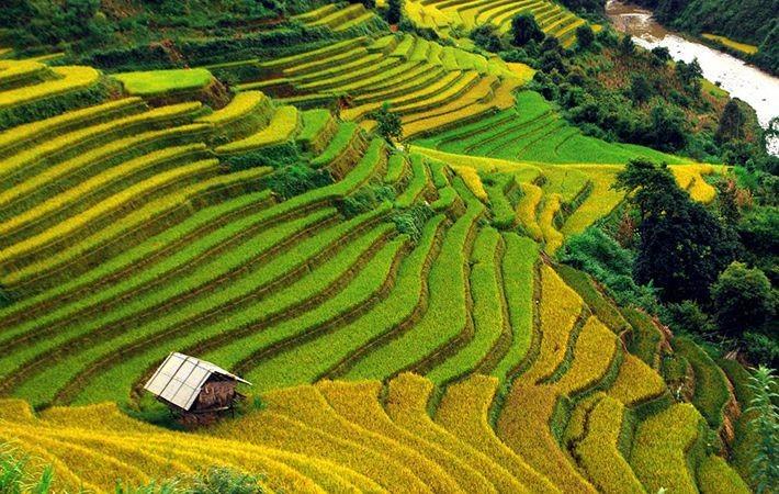 Pesawahan terasering di kabupaten Mu Cang Chai-Keindahan  megah di daerah  pegunungan Tay Bac - ảnh 2
