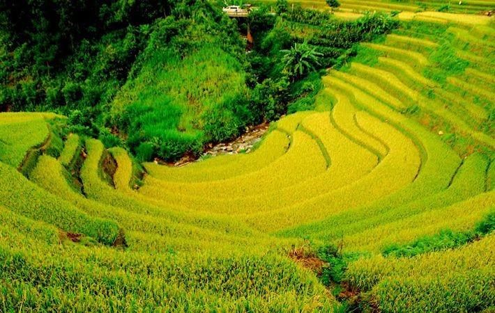 Pesawahan terasering di kabupaten Mu Cang Chai-Keindahan  megah di daerah  pegunungan Tay Bac - ảnh 4