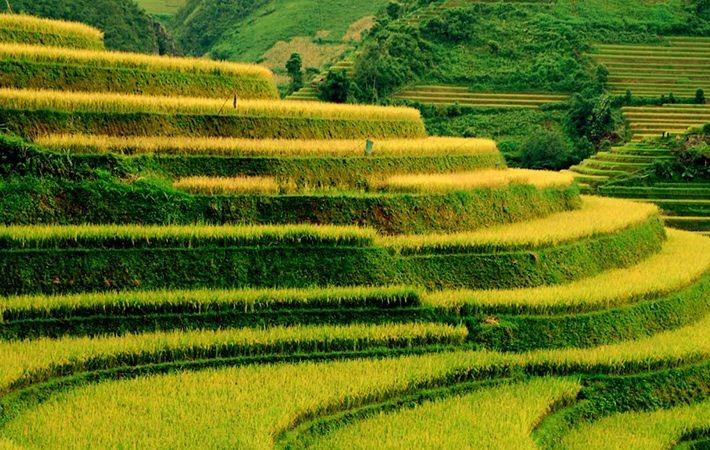 Pesawahan terasering di kabupaten Mu Cang Chai-Keindahan  megah di daerah  pegunungan Tay Bac - ảnh 5