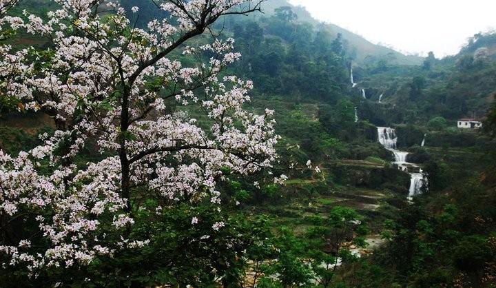 Festival Bunga Ban-Dien Bien-2017: Tempat berhimpunnya kebudayaan etnis-etnis daerah Tay Bac - ảnh 3