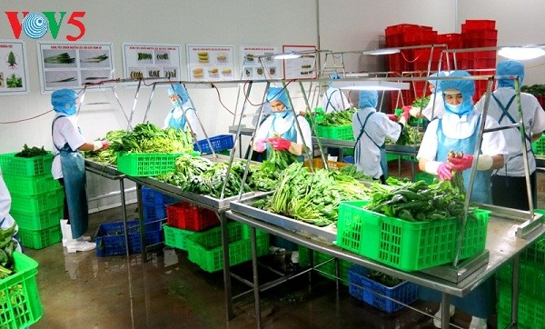 Menggandakan pola pertanian teknologi tinggi  untuk kepentingan restrukturisasi - ảnh 1