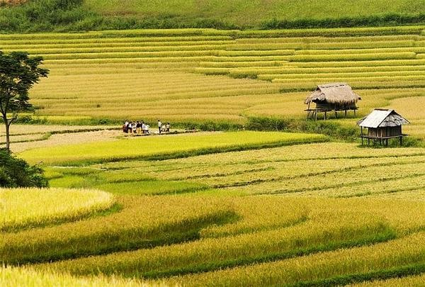 Daerah dataran tinggi Sin Ho: Keindahan yang masih liar di daerah pegunungan dan hutan Tay Bac - ảnh 3