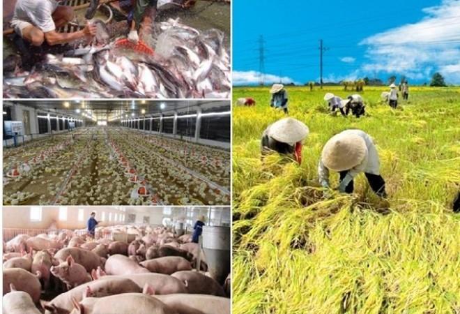 Bank Dunia membantu Vietnam di bidang pertanian - ảnh 1