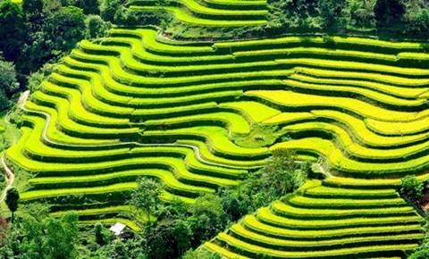 Festival menguak tabir lanskap nasional pesawahan terasering Mu Cang Chai - ảnh 1