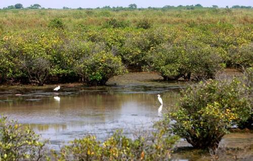 Memperkuat pengelolaan zona-zona cadangan biosfer daerah dataran rendah sungai Hong, turut beradaptasi dengan perubahan iklim - ảnh 1