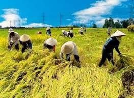 新しい農村作りに関する国家目標プログラム - ảnh 1