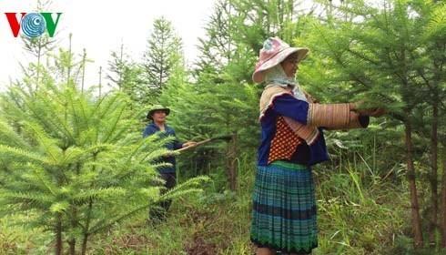 植林事業の結果を評価するオンライン会議 - ảnh 1