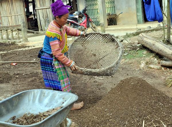 少数民族の人々の農業生産活動 - ảnh 5