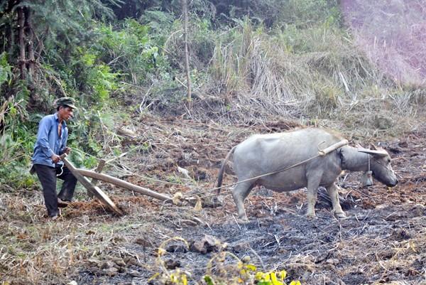 少数民族の人々の農業生産活動 - ảnh 3