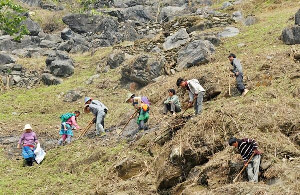 少数民族の人々の農業生産活動 - ảnh 7