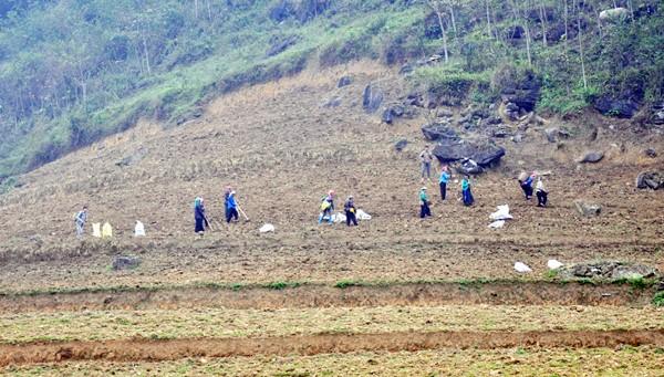 少数民族の人々の農業生産活動 - ảnh 10