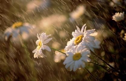 雨をテーマにした歌 - ảnh 1