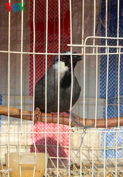 イェンフック鳥市場(1) - ảnh 4