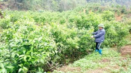 バックカン省における新農村作り - ảnh 2