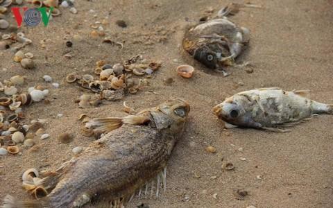 ベトナムの環境汚染問題 - ảnh 1