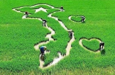 ベトナムの観光地を歌う - ảnh 1