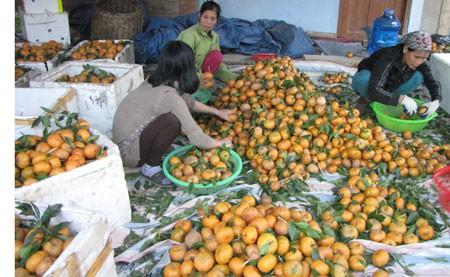 バクカン省 農産物の地理的表示を活用 - ảnh 1