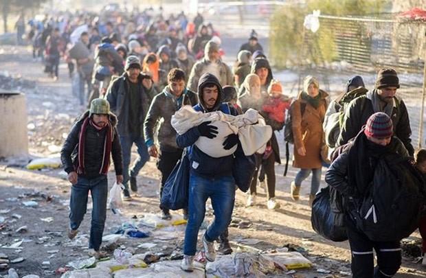 2016年の最大問題となった難民危機 - ảnh 1