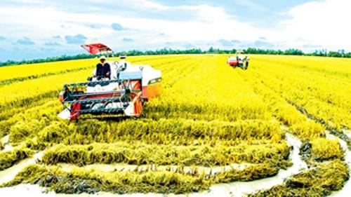 メコンデルタでの農業の大規模化へ向けて - ảnh 1