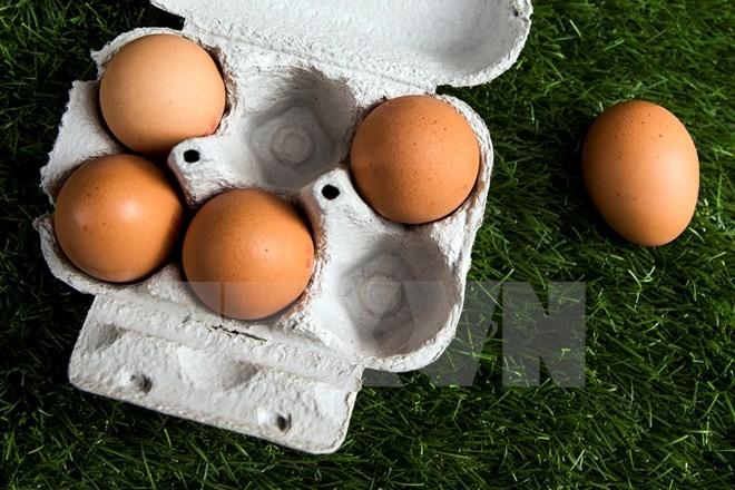 殺虫剤に汚染された卵 EU域内外17の国と地域に - ảnh 1