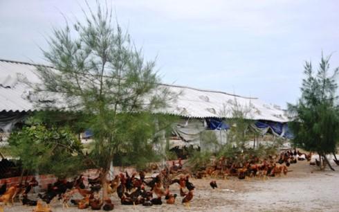 農産物のバリューチェーン開発に関する経験交換 - ảnh 1