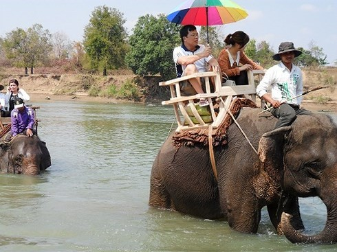 ダクラク省における野生ゾウ群れの保護 - ảnh 1