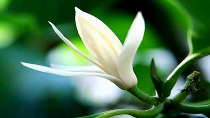 ベトナムの季節の花を感じされる曲 - ảnh 1