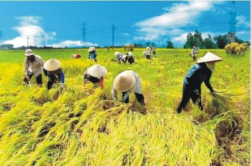 Meningkatkan kualitas perancangan pembangunan pedesaan baru - ảnh 3