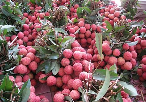 Siap bagi festival buah-buahan yang pertama di Vietnam Utara - ảnh 1