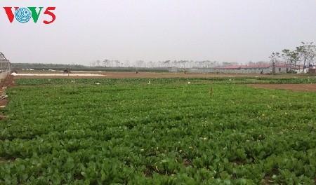 Saudari Tran Thu Hang ingin membawa bahan makanan yang baik kepada para konsumen - ảnh 1