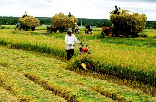 Kamboja memperhebat pengembangan ekspor beras - ảnh 1