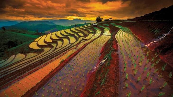 Thailand mengembangkan pertanian 4.0 - ảnh 1