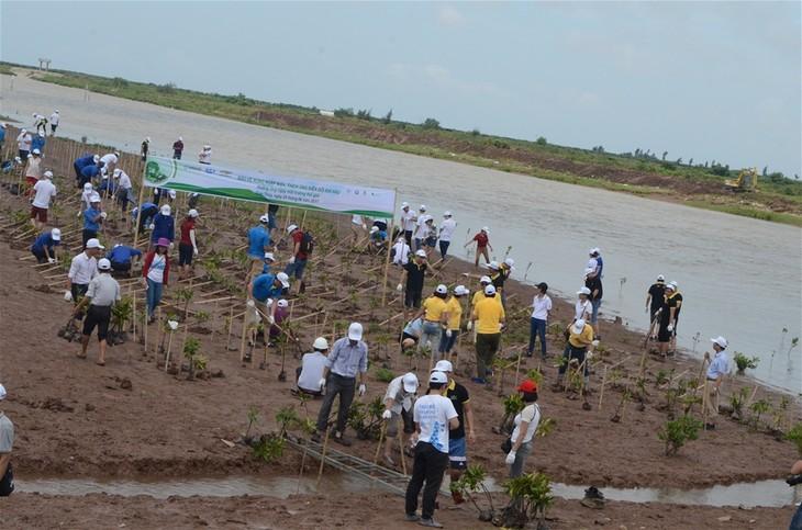 Vietnam siembra manglares en enfrentamiento al cambio climático - ảnh 1