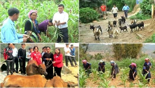 Gobierno vietnamita orienta el desarrollo socioeconómico para el segundo semestre del año - ảnh 1