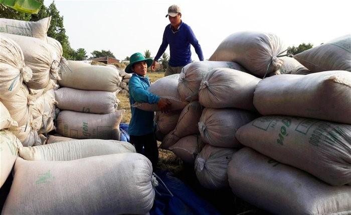 La exportación del arroz vietnamita prevé aumentar en lo que queda del año - ảnh 1