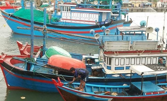 Provincias costeras de Vietnam se preparan para aminorar las consecuencias del tifón Kirogi - ảnh 1