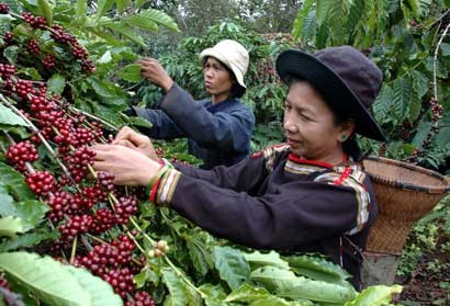 Sustainable development goes along with building a brand for Vietnamese coffee  - ảnh 1