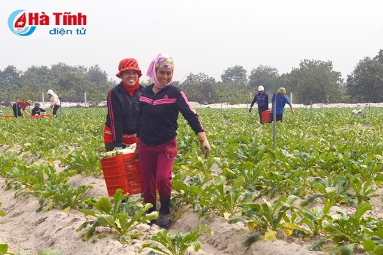 Chain model increases Vietnamese agriculture values - ảnh 1
