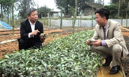 Developing new-style cooperatives   - ảnh 3
