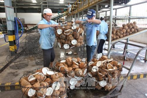 Agro-forestry-fishery exports earn nearly 21 billion USD in 8 months - ảnh 1