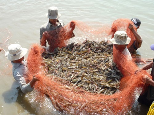Adaptation of shrimp farming to climate change   - ảnh 1