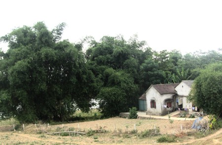 The structure of a traditional Viet village - ảnh 1