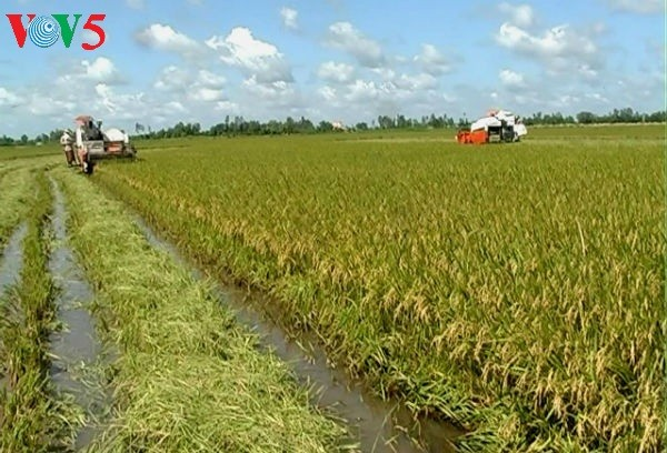Mekong Delta's agriculture ahead of integration challenges - ảnh 1