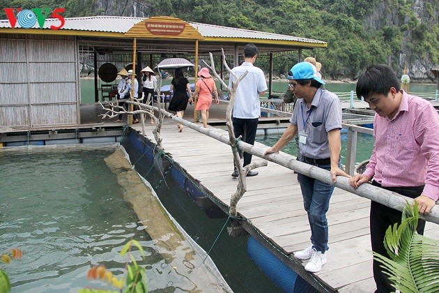 Living in harmony with the sea: means of subsistence on Ha Long Bay - ảnh 3