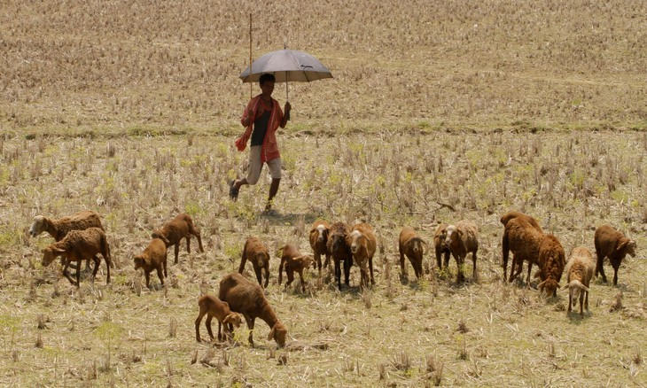 Humid heat waves in Southern Asia likely to kill even healthy people - ảnh 1