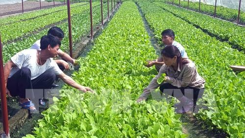 Vietnam applies high-tech in agriculture production  - ảnh 1