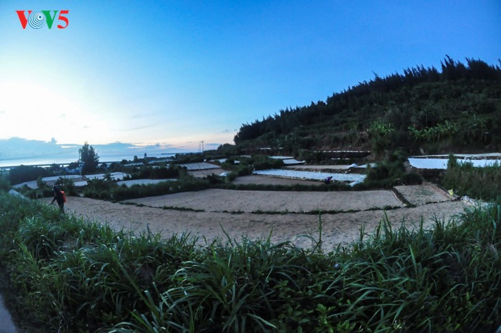 Ly Son – an ideal destination for summer vacations - ảnh 14