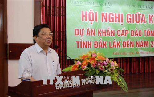 Dak Lak tries to conserve its elephant herds - ảnh 2